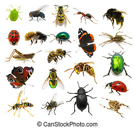 conjunto, insectos