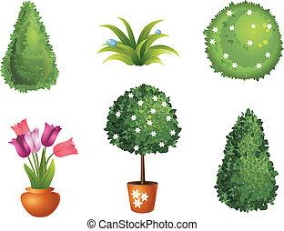 conjunto, jardín, plantas