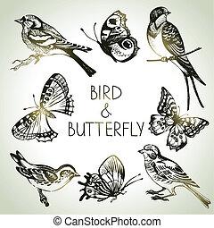 conjunto, mariposa, pájaro, ilustraciones, mano, dibujado