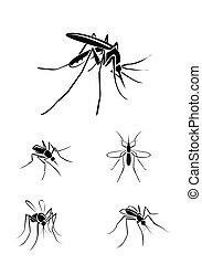 conjunto, mosquito, colección