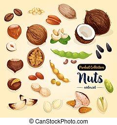 Conjunto, nuez,  superfood, frijol,  vector, diseño, Semilla