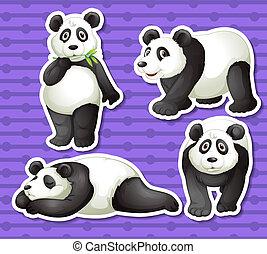 conjunto, panda
