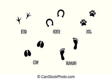 conjunto, pie, siluetas, vector, negro, impresión animal