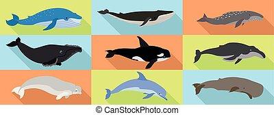 conjunto, plano, ballena, estilo, iconos
