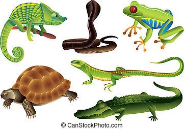 conjunto, reptiles, anfibios