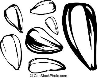 conjunto, semilla, girasol