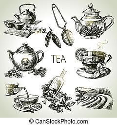 conjunto té, vector, bosquejo, mano, dibujado