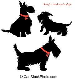 conjunto, terrier, escocés, perros
