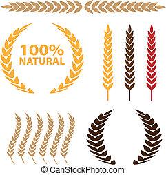 conjunto, trigo, icono