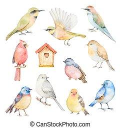conjunto, vector, acuarela, birds.