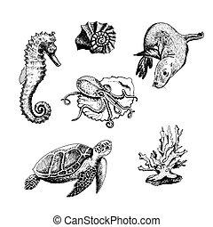 conjunto, vector, vida marina, océano, tortuga tortuga...