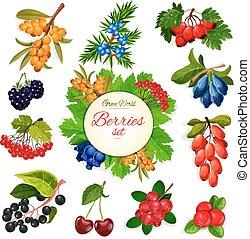 conjunto, wildberry, iconos, vector, fruits, bayas