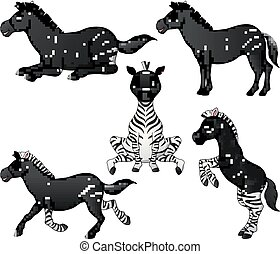 conjunto, zebra, colección, caricatura