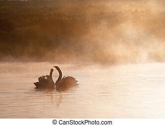 conmovedor, romántico, escena, de, apareado, par, de, cisnes, en, brumoso, brumoso, lago