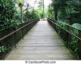 Connecting bridge in forest