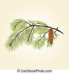 cono, pino, vettore, ramo