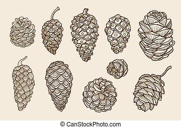 conos del abeto, árbol, pino, cedro, picea, navidad