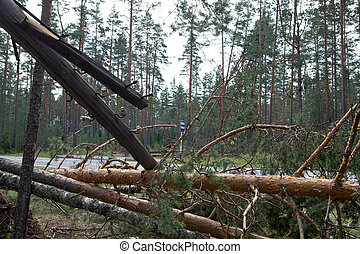 "Consequences of hurricane ""Asta"", Russia. The uprooted trees and the tumbled down support of lines electricity transmissions"