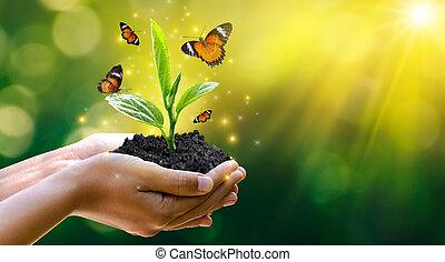 conservación, bokeh, árbol, ambiente, bosque, crecer, tenencia, plano de fondo, campo, día, concepto, verde, seedlings., tierra, mano, manos, hembra, árboles, naturaleza, pasto o césped