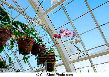Conservatory of Flowers Plantlife - Plantlife at the ...