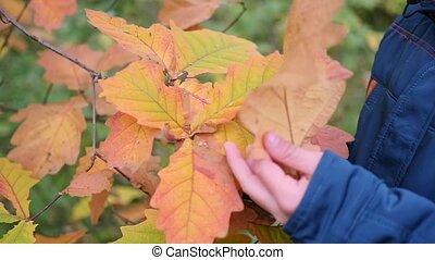 considérer, garçon, paysage., étudier, scénique, parc, feuilles jaune, automne, beau, endroit, air., promenades, frais, rouges