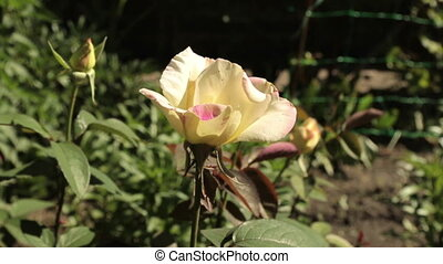 Consider a blooming rose from the top down. Beautiful...