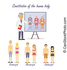 Constitution of the human body. Doctor shows type human body. Ectomorph endomorph and mesomorph, skeleton people, health physique, healthy figure. Healthcare. Normal structure. Vector illustration