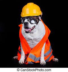 construction., 建設, concept., 下に, 犬