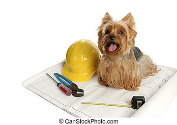 Construction Dog - A yorkshire terrier dog working on a...