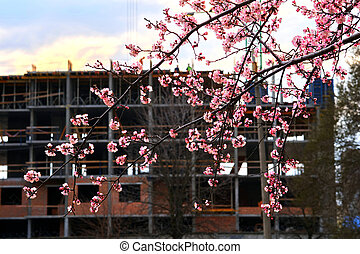 Construction of a residential high-rise building and wonderful spring flowers