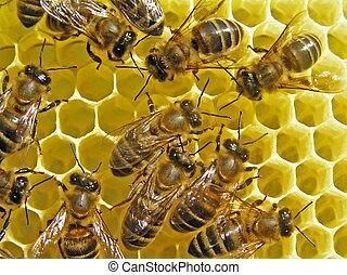 construya, abejas, honeycombs.