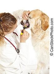 consultation, vétérinaire