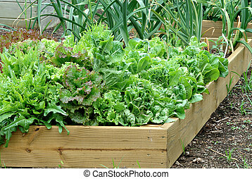Container Garden - A beautiful lettuce and onion garden...