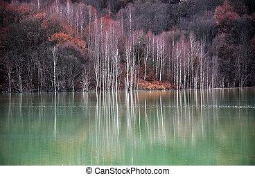 contaminado, água lago