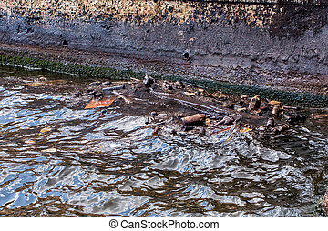 Contamination of bays by human waste, damaging the...