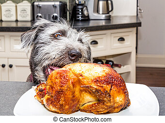 contatore, rubare, pollo, cucina, cane