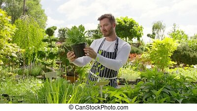 Content man looking after green plants