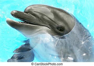 contente, bonito, golfinho, sorrindo, em, um, azul, água piscina, ligado, um, claro, dia ensolarado