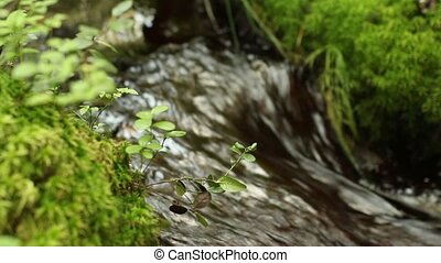 continuous stream of crystal clear water of a forest stream...