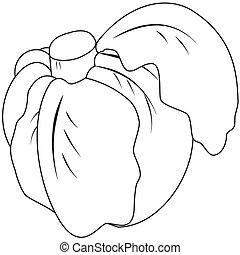 Contour head cabbage