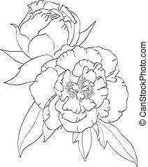 Contour image of peonies. Art vector illustration.