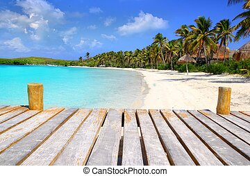 Contoy Island palm treesl caribbean beach Mexico