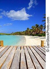 Contoy Island palm treesl caribbean beach Mexico - Contoy...
