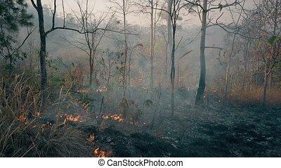 contrôlé, métrage, global, 4k, rainforest., brûlé, crisis., ...