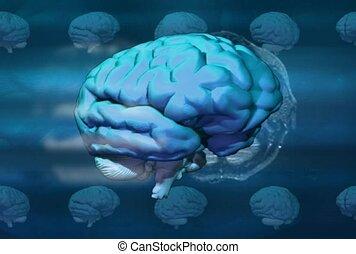 contrôle, anatomie, centre, fonction, cerveau