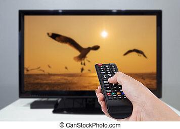 contrôle, télévision éloigné, tenue, écran tv, main, fond, oiseau