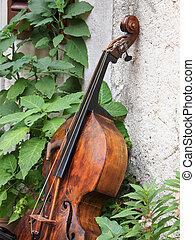 contra bas - old contra bass in the garden