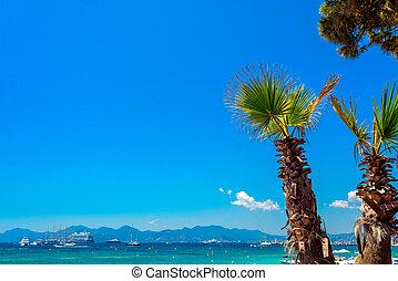 contra, cannes, azul, passeio, árvores, sky., palma