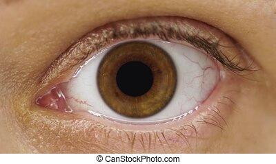 contracter, pupille, noisetier, oeil poché, iris, femme