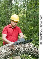 contractor tree
